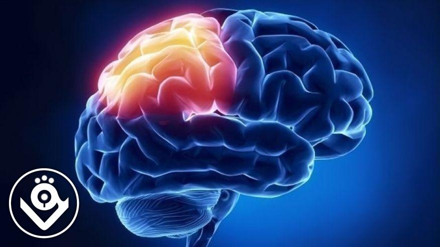 لیست متخصصین مغز و اعصاب